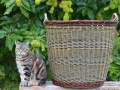 Katherine-Lewis-willow-basket_04