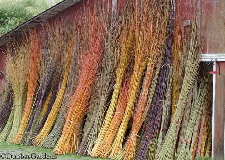 Dunbar Gardens basketry willows