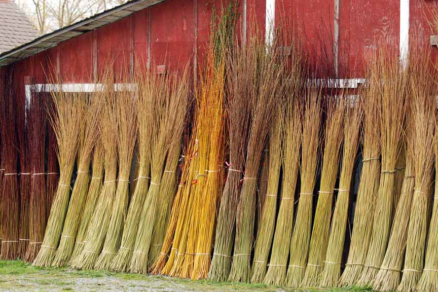 harvested basketry willow at Dunbar Gardens