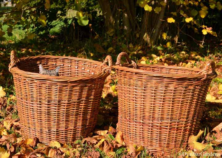 Dunbar Gardens Links To Willow Basketry Skagit