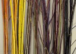color package willows samples