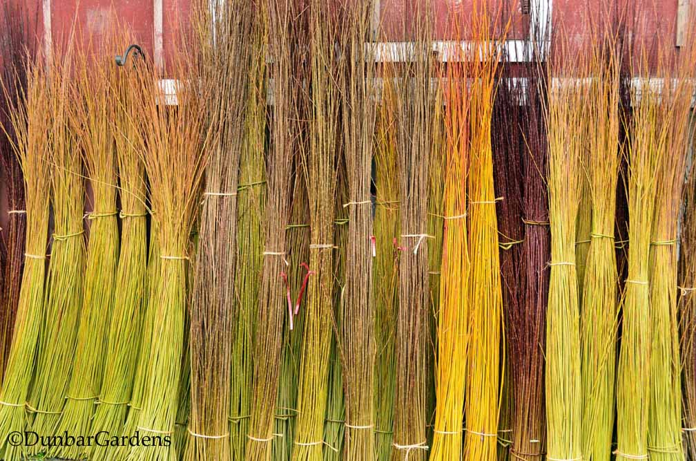 Dunbar Gardens basketry willow