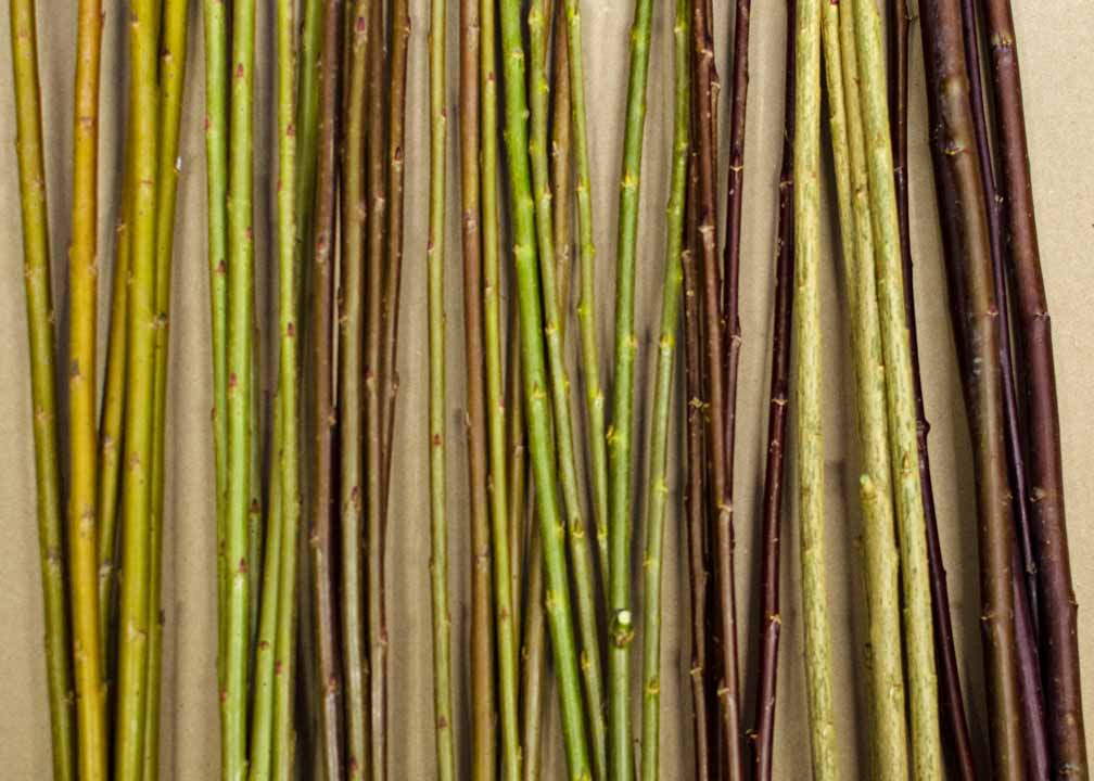 living willows structures package samples
