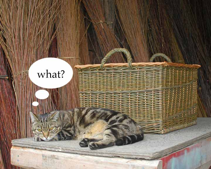 frequently asked questions cat at Dunbar Gardens