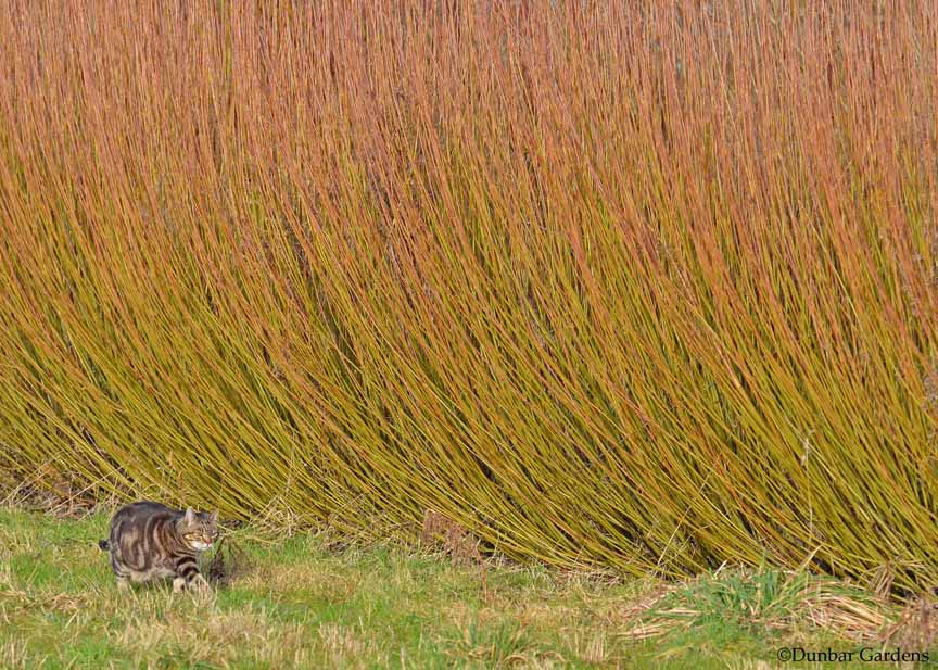 Spike inspects the basketry willow