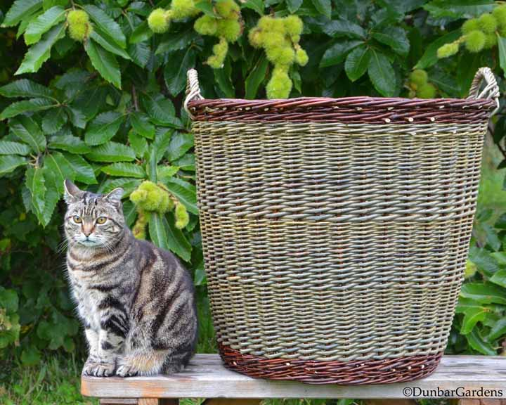 willow log basket and cat