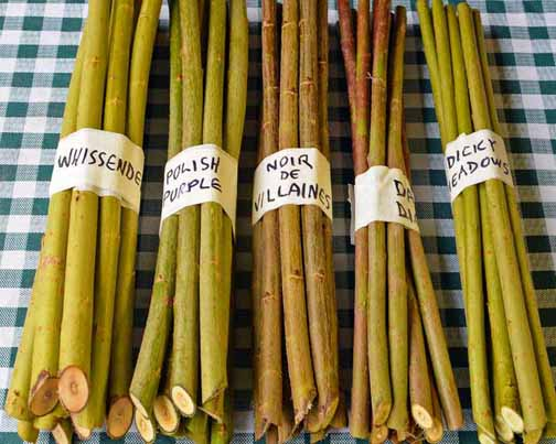 willow cuttings package