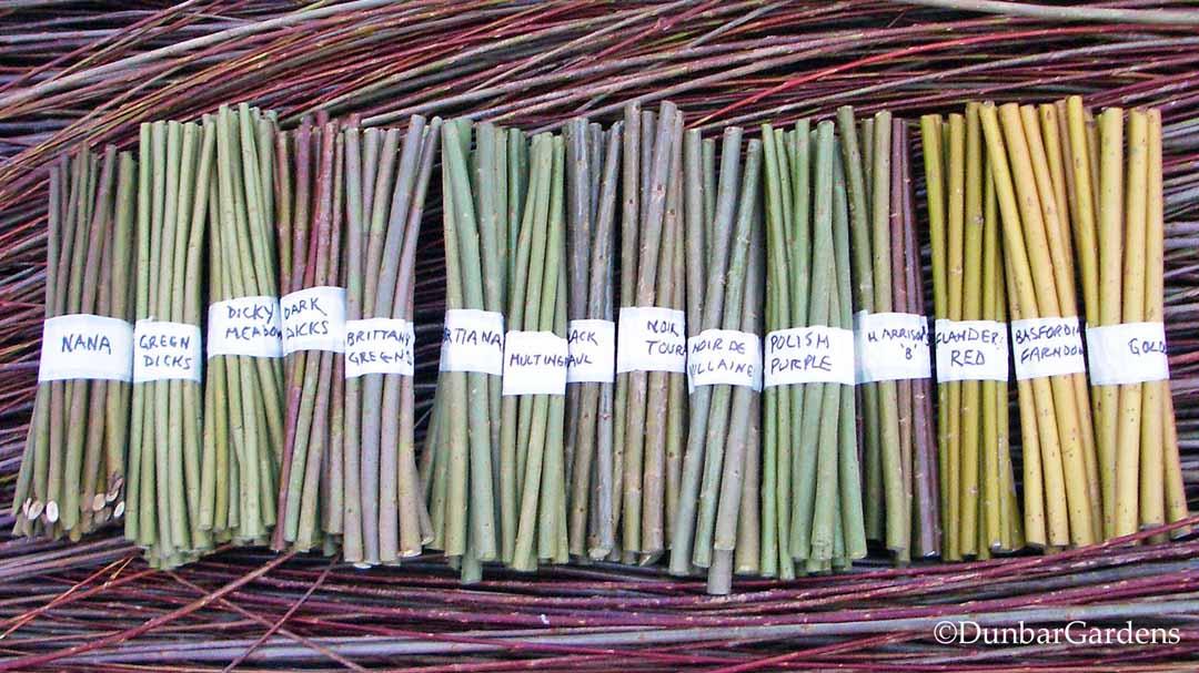 Dunbar Gardens willow cuttings
